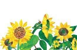 Tranh sâu và hoa hướng dương