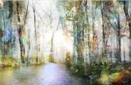 tranh ánh sáng trong rừng sâu