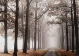 Tranh cong đường nhỏ trong rừng cây