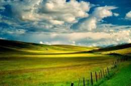 Tranh in đồng cỏ xanh mướt 4-3016