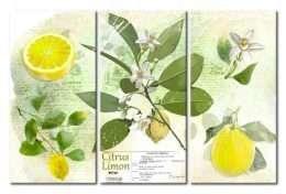 tranh in phòng ăn lá và trái chanh