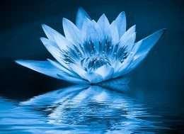 Tranh nghệ thuật hoa sen trên mặt nước 4-4019