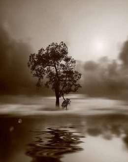 Bức tranh in cây một mình trên đảo 4-3028