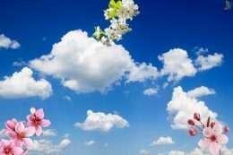 Tranh dan tran bau troi trong xanh va hoa 1 5-12001