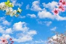 Tranh dan tran bau troi trong xanh va hoa 2 5-12002