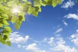 Tranh dan tran bau troi trong xanh va la 5-12005