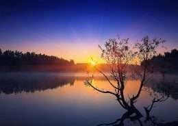 Tranh in cây cô đơn tron ghồ xanh lam 4-3025