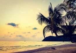 Tranh in canvas cây dừa bên bãi biển 4-3026
