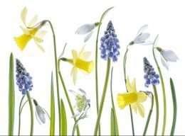 Tranh hoa khoe sắc vào mùa xuân 4-1003