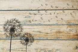 Tranh in nghệ thuật hoa bồ công anh trên nền vân gỗ 4-1015