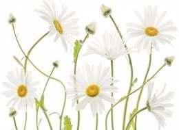 Tranh in nghệ thuật hoa trên tường 4-1019