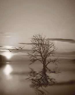 Tranh in những chú chim và cây cô đơn 4-3033