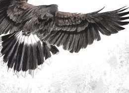 Tranh in đại bàng đang sải cánh 4-8028