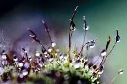 Tranh in giọt sương long lanh trên hoa cỏ 4-8039