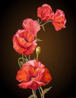 Tranh in canvas hoa anh Túc màu đỏ rực rỡ 4-8040